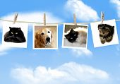 stock photo of puppy kitten  - Photos of dogs and cats hanging from a clothes line - JPG