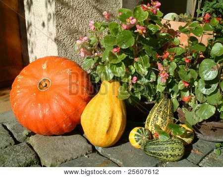 orange, yellow and green pumpkins in doorway on cobbled street in germany