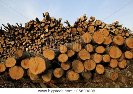 wooden logs on blue sky background