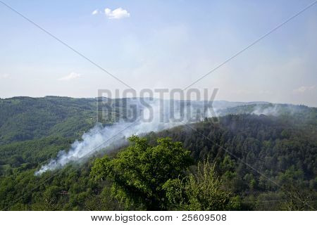 forest fire in the countryside