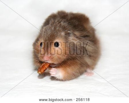 Hungry Hamster