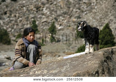 ANNAPURNA, NEPAL – MARCH 30 : Young Nepali girl takes care of a small baby goat in Annapurna, Nepal March 30, 2008. Annapurna trail is well known for its trekking activities.