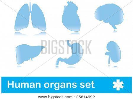 Human organs. vector set