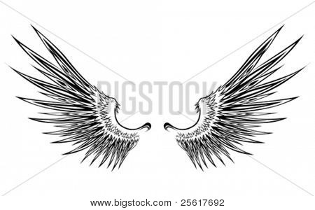 set of wing illustration