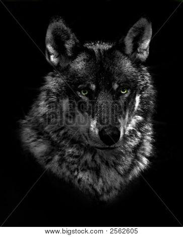 Wolf Low Key