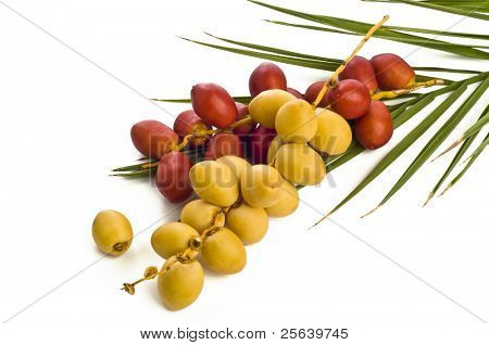 A bunch of yellow and red raw dates with palm leaf on white ground.