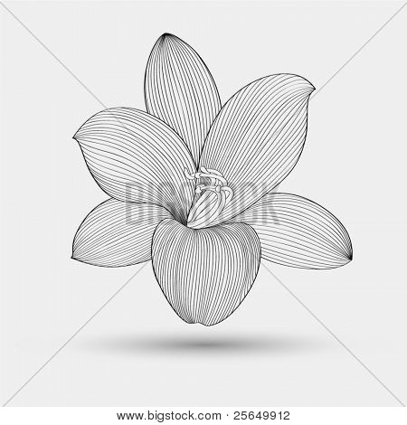 Abstract floral background. Vector flower lily. Element for design.