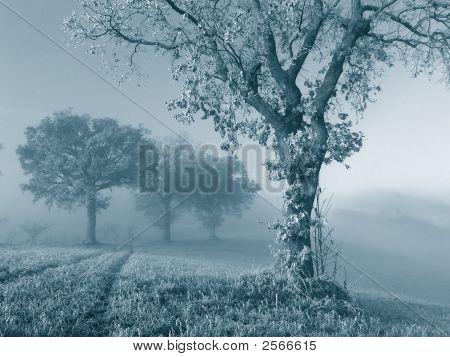 Frozen Oak Tree