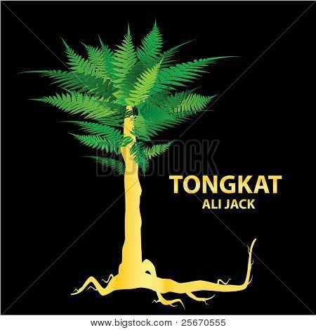 Tongkat Ali - nature's sexual stimulant