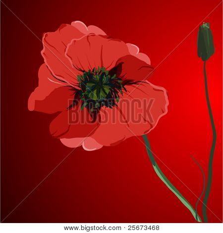 red flower poppy vector memorial illustration