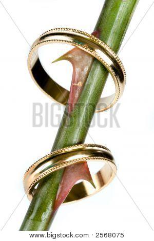 Wedding Thorns