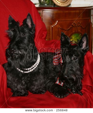 2 Black Scotty Dogs 2