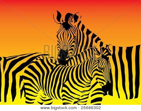 Vector illustration of a herd of zebras
