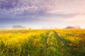 Autumn Landscape. Fall Nature. Yellow Meadow With Mist At Dawn. Vivid Purple Sky Over Field. poster