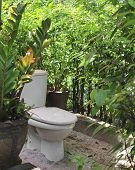 picture of outhouses  - Outhouse toilet surround with plant likewise partition really use in Thailand - JPG