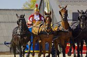 Chariot racing, Marbach Stallion Parade, Germany