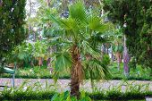 Palm Tree. Tropical Palm Tree. Green Palm Tree. Palm Leaf. poster