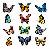 Various Cartoon Butterflies. Set Vector Illustrations Of Butterflies. Colored Butterfly Insect, Vari poster