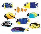picture of clown fish  - set of sea fishes - JPG