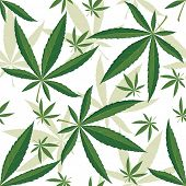 picture of marijuana leaf  - Cannabis seamless ornament over white background - JPG
