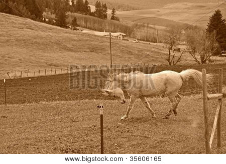 White Horse Running In Rural Scenic In Sepia Tones