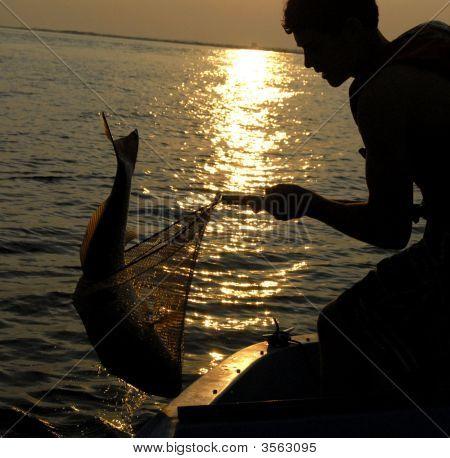 Netting The Fish