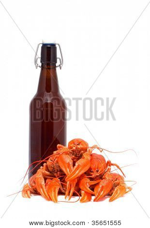 Beer and crawfish. isolation on white