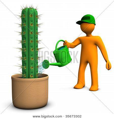 Cacti Gardener