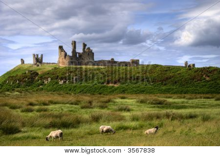 Dunstanburgh Castle And Grazing Sheep