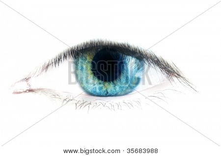 Human Eye. Isolation on white