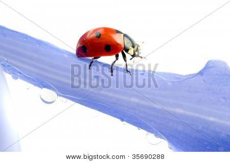 flower petal with ladybug under blue sky