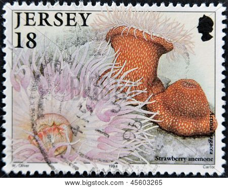 A stamp printed in Jersey shows strawberry anemone and actinia fragacca circa 1994