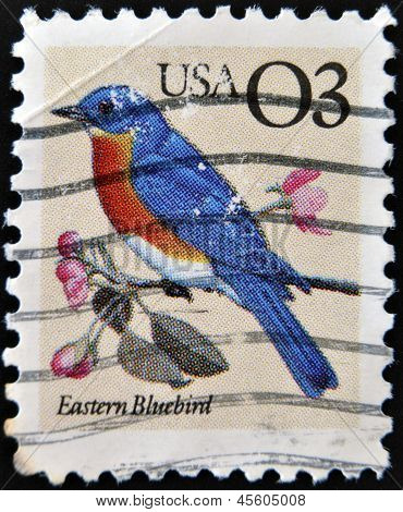UNITED STATES - CIRCA 1996: A stamp printed in USA shows Eastern Bluebird circa 1996