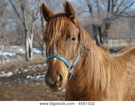 Horse In The Country