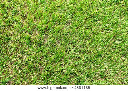 Grass Tetxure