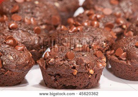Double Choc Muffins