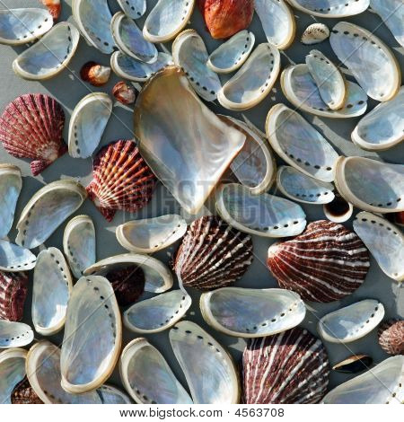 Abstract Background With Sea Shells