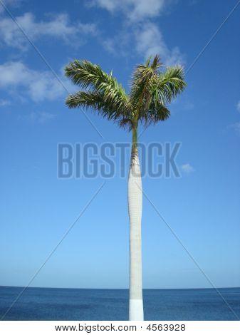 Calm Palm Over Ocean