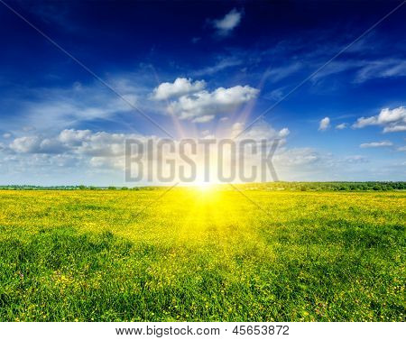 Spring summer background - blooming flowers field meadow with blue sky and bright sun