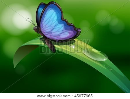 Illustration of a blue butterfly above a leaf