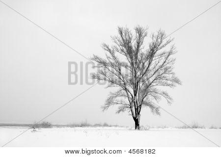 Árvore sozinho entre campo de neve