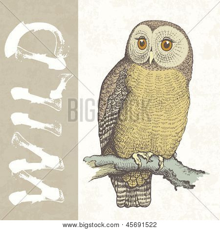 Owl hand drawn vector illustration, wild nature symbol