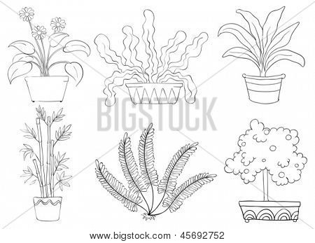 Illustration of the silhouettes of different shrubs on a white background