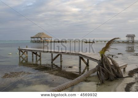 Fallen Palm And Piers