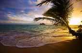 stock photo of beach sunset  - sunrise at lanikai beach in Hawaii through the silhouetted branhes of a coconut palm - JPG