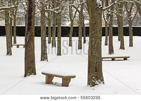 Trees and benches under the snow, the serenity white walk under the snow