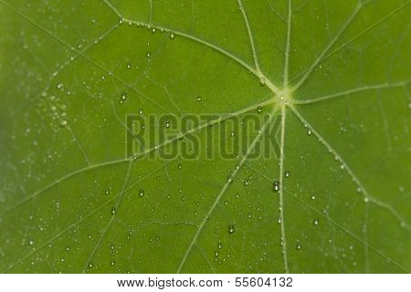 Makro Green Leaf With Drops