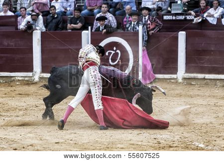 Spanish bullfighter Juan Jose Padilla with the cape bullfighting a bull of nearly 600 kg