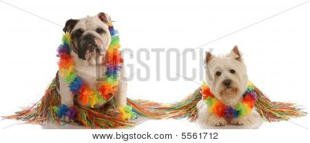 Westie  And Bulldog As Hula Dancers