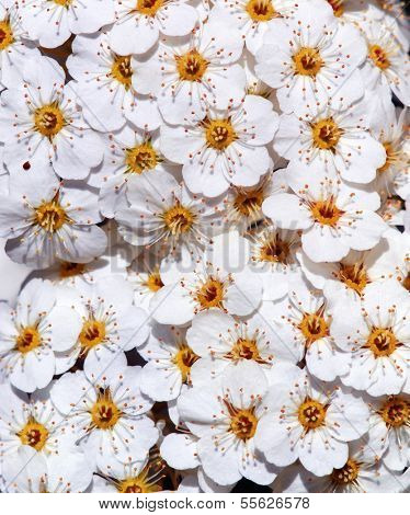 Texture of beautiful flower. Nature composition. Element of design.